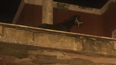 """Photo of Un cavallo sul tetto della stazione """"Castellammare Terme"""""""