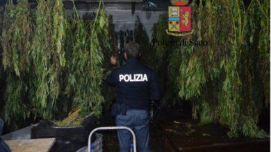 Photo of Gragnano. Producevano marijuana al posto degli ortaggi: padre e figlio arrestati