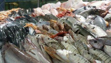 Photo of Catanzaro. Sequestrati 50 kg di pesce non tracciati: gravissime carenze igienico-sanitarie