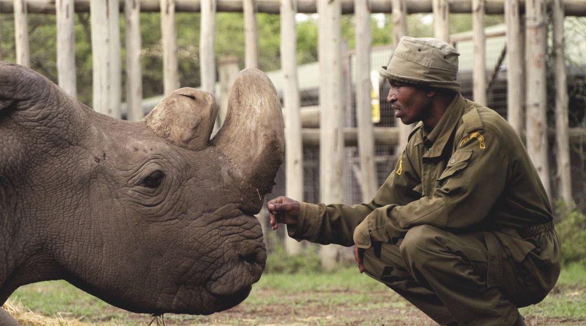 Photo of Kenya: morto l'ultimo esemplare di rinoceronte bianco
