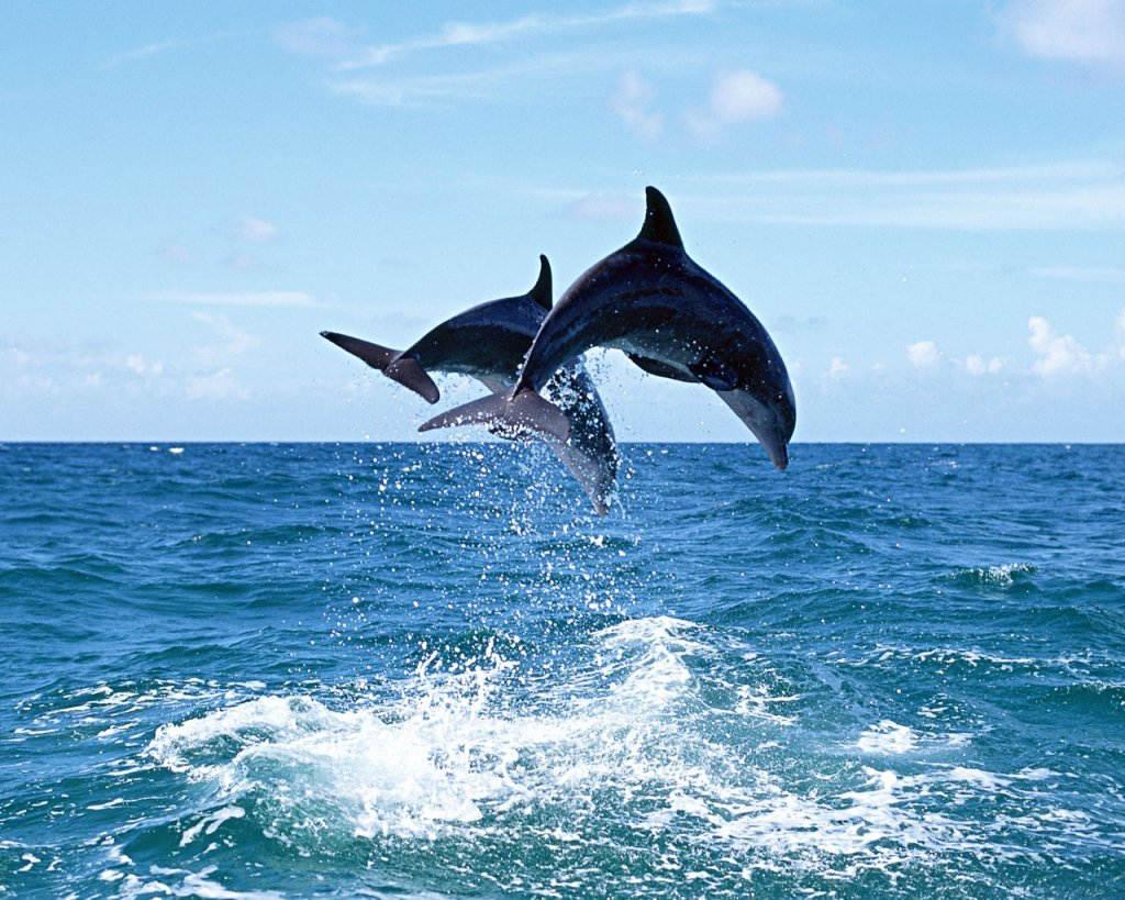 Photo of Coppia di delfini nel Cilento: avvistata a soli 300 metri dalla costa di Pisciotta