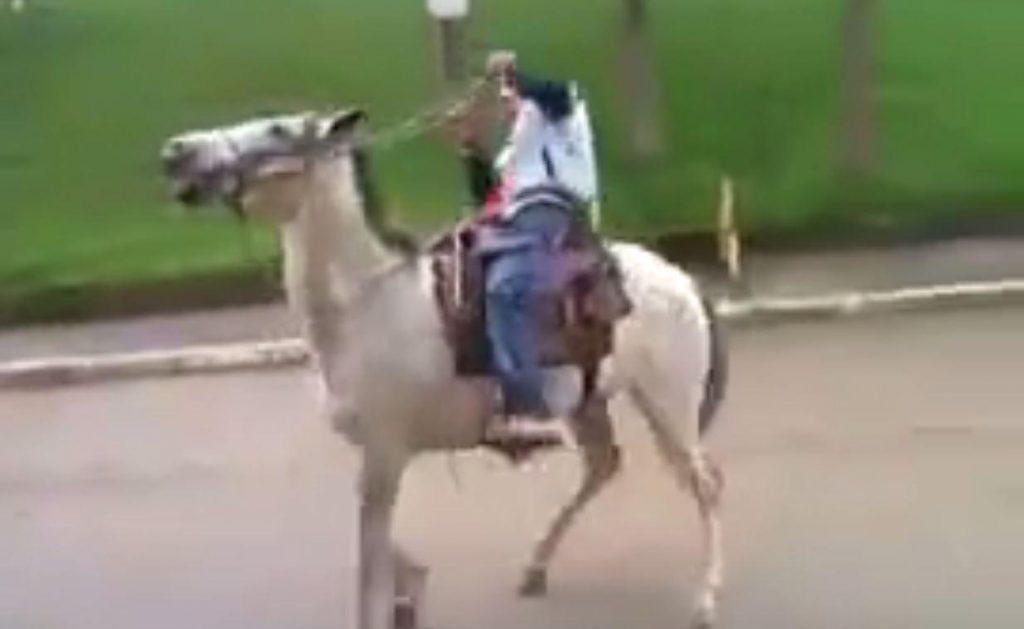 Photo of Ubriaco a cavallo, denunciato dalla Polizia per guida in stato d'ebrezza