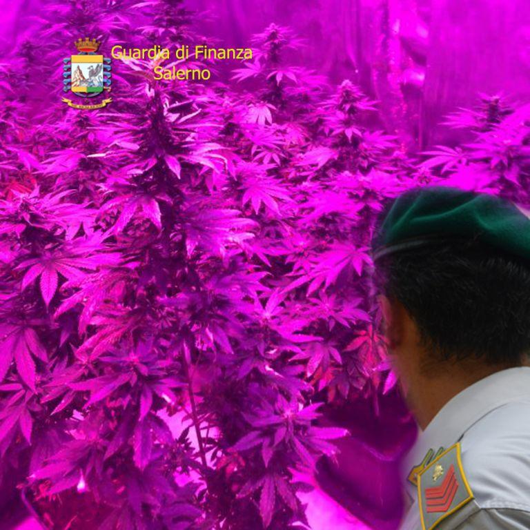 Photo of Angri. Laboratorio di marijuana in casa: denunciato