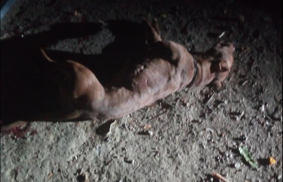Photo of Siderno, arrestato uomo per maltrattamenti su animali e resistenza al pubblico ufficiale