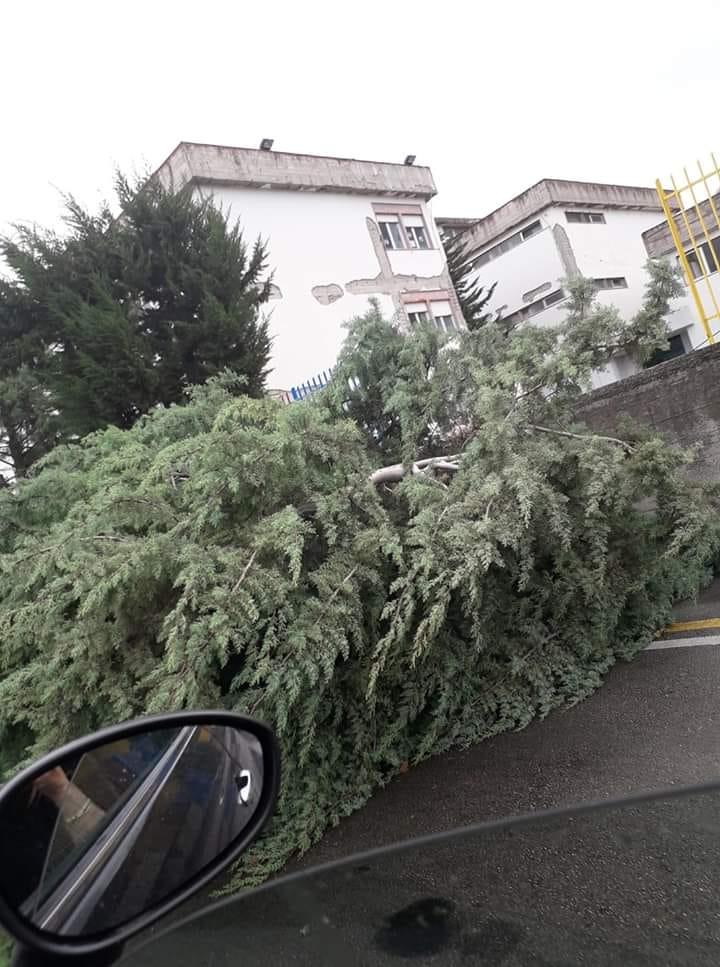 Photo of Calabria, l'intera regione flagellata da vento e maltempo: Vigili del Fuoco a lavoro ininterrottamente