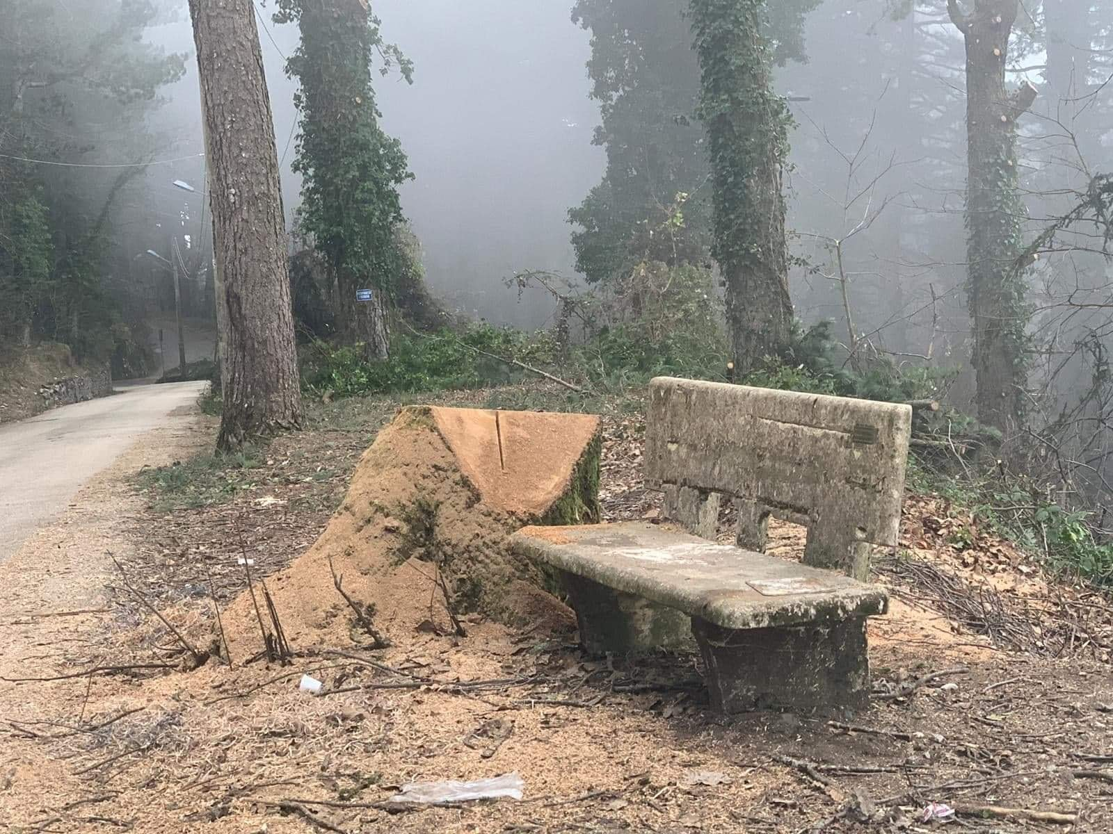 Photo of Monte Faito. Alberi secolari tagliati, la denuncia del WWF: l'Ente Parco avvia un'indagine