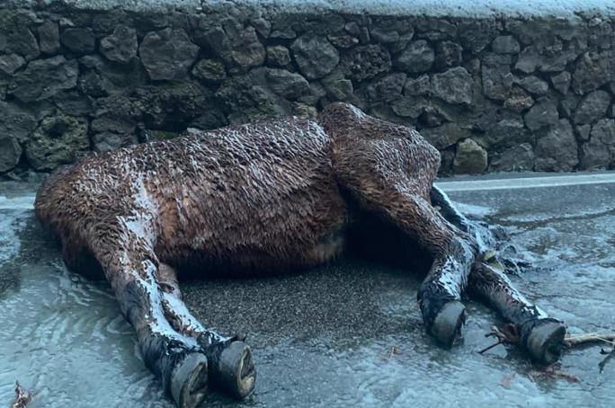 Photo of Cavallo ritrovato morto sulla strada per il Faito