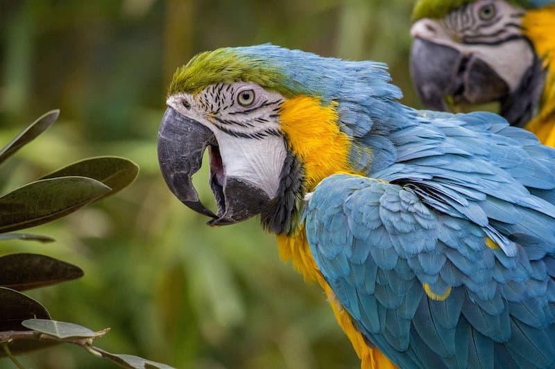 Photo of Faceva da palo allo spacciatore, 'arrestato' un pappagallo