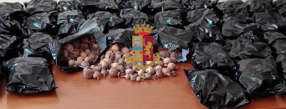 Photo of Napoli. Cani antidroga scoprono 4 kg di stupefacenti in via Cesare Rosaroll: arrestato pakistano