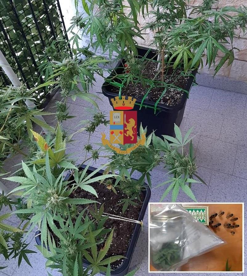 Photo of Napoli. Polizia scopre marijuana e pistola in un appartamento all'Arenella: denunciato 36enne