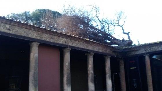 Photo of Maltempo in Campania, albero cade su Palestra Grande: vietato accesso alla zona